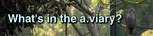 Whats in the a.viary?